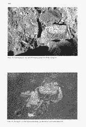 /tessmannDigital/presentation/media/image/Page/Schlern/1997/01_08_1997/Schlern_1997_08_01_46_object_6012258.png